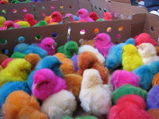 шарени пиленца